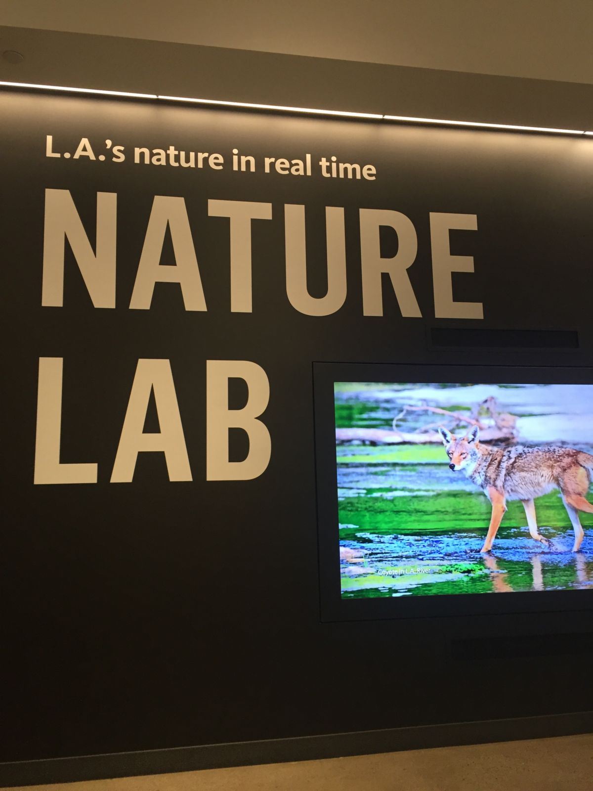 Natural History Museum Nature Lab