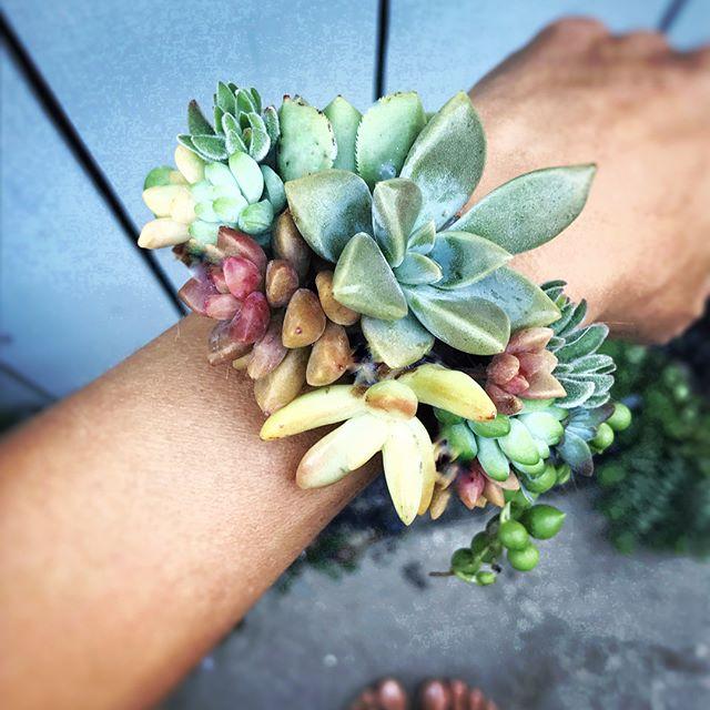 Urban Bloom Succulents